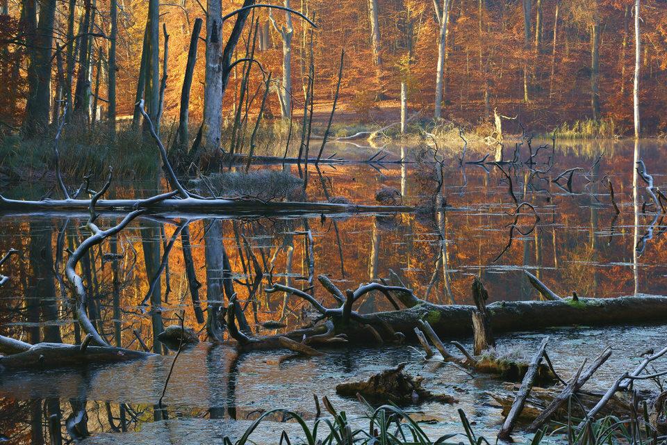 Gewässer im Wald
