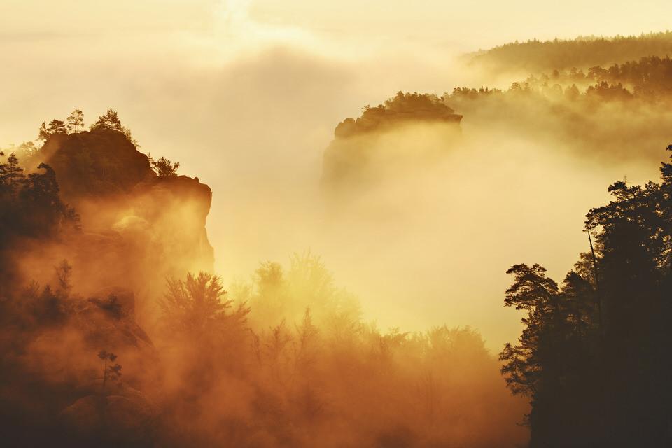 Nebelwald mit goldenem Licht