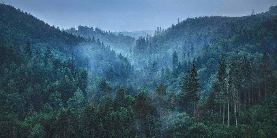 Buchtipp: Deutschland, deine Wälder - kwerfeldein – Magazin für Fotografie
