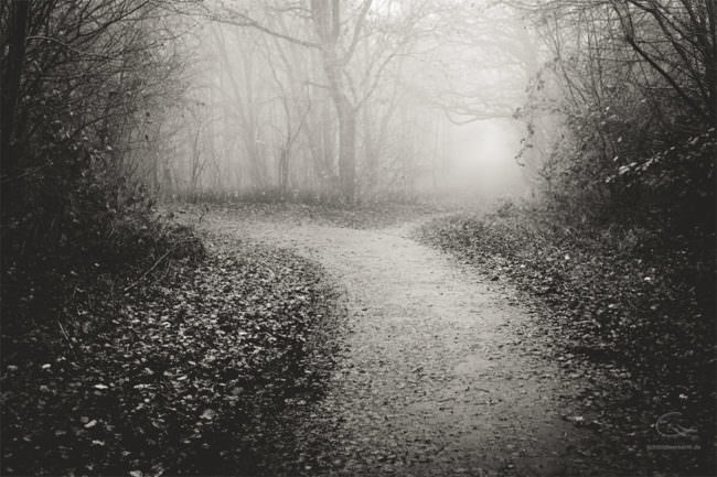 Weg im neblogen Wald