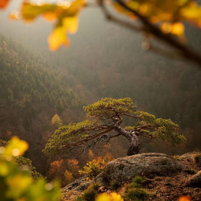 Baum auf einem Felsen