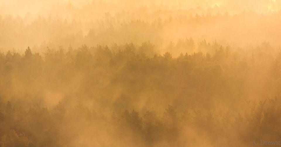 Nebliger Wald im Sonnenlicht