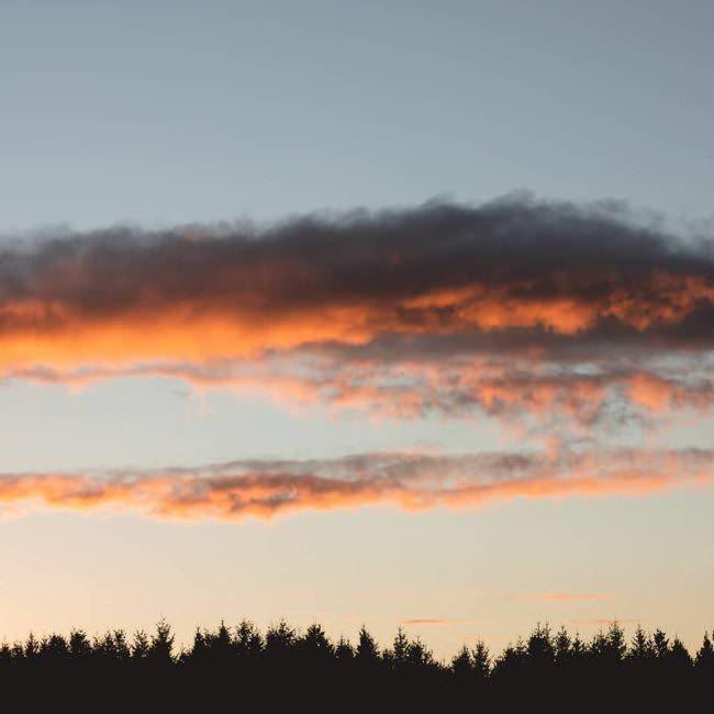 Wolken über einem Wald