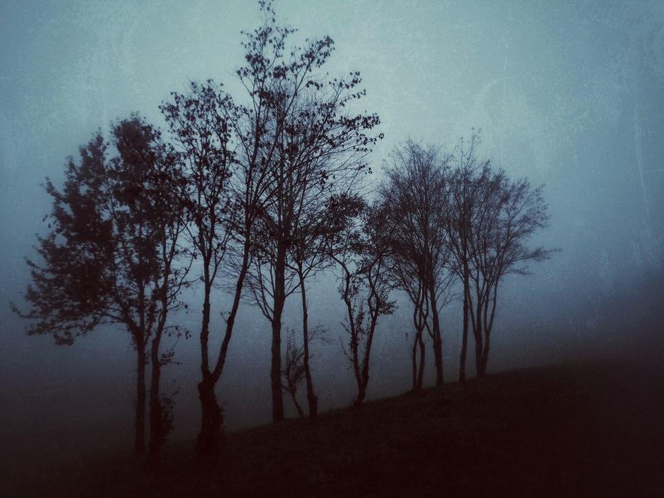 Kahle Bäume im Nebel