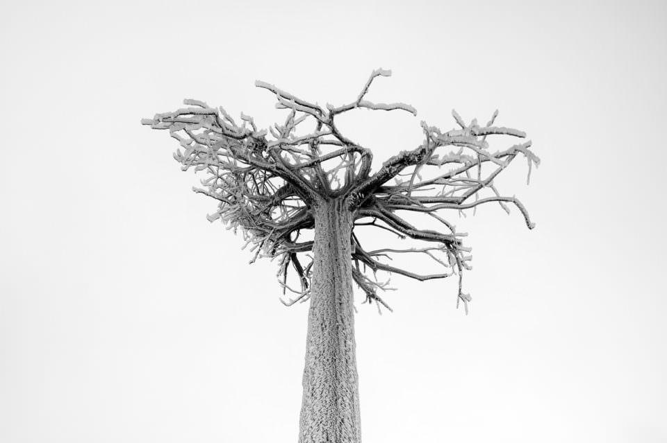 Baum im Frost