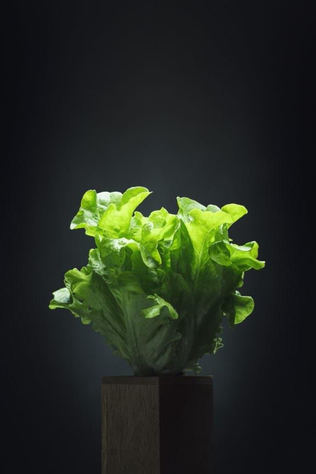 Salat als Skulptur