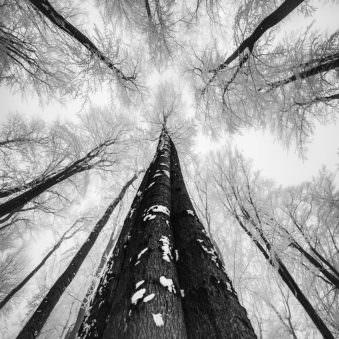 Baum aus der Froschperpektive