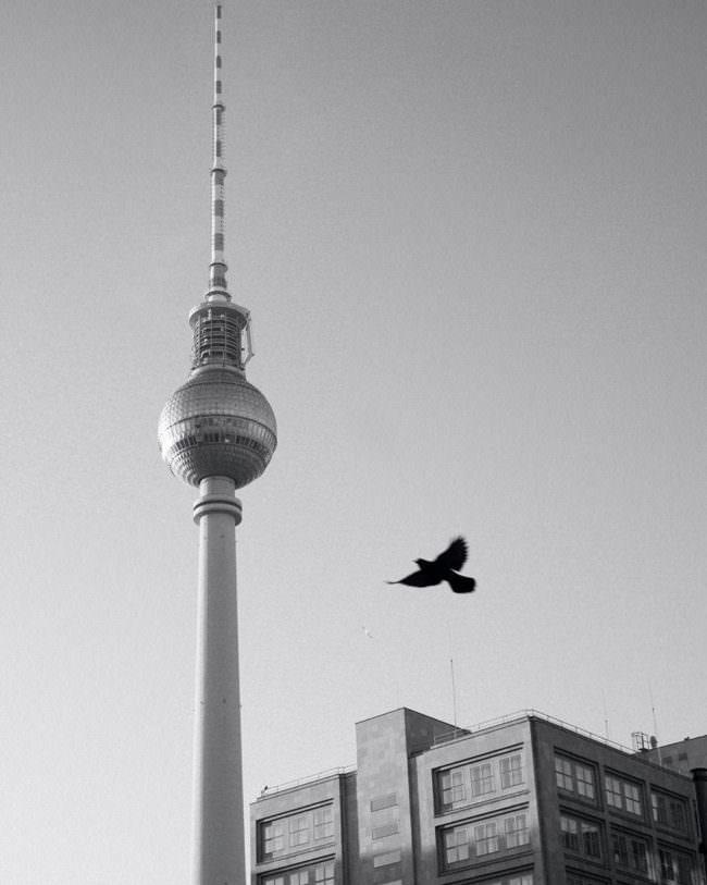 Vogel vor dem Fernsehturm