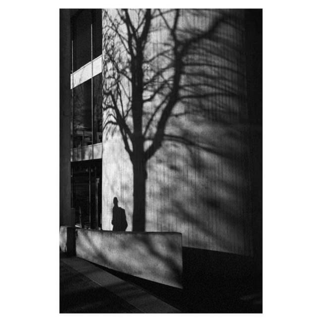 Schatten eines Baumes an einer Wand