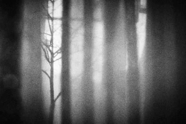 körnige Aufnahme eines Waldes