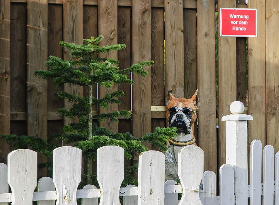 Hund und Tannenbaum vor einem Zaun