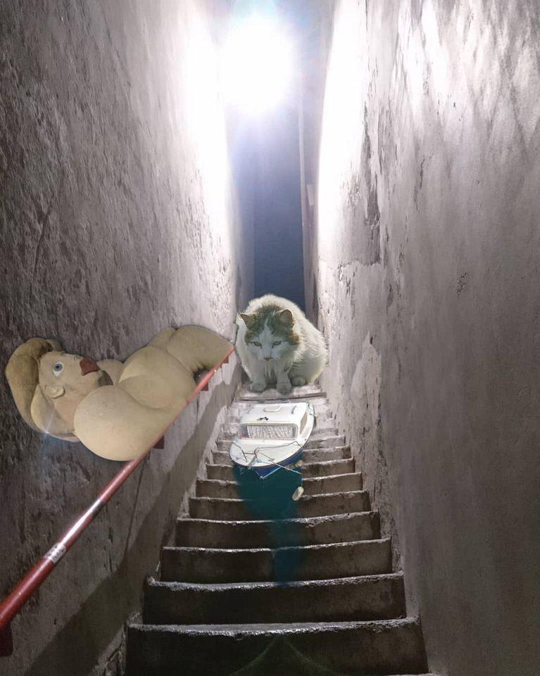 Collage Katze auf Treppe