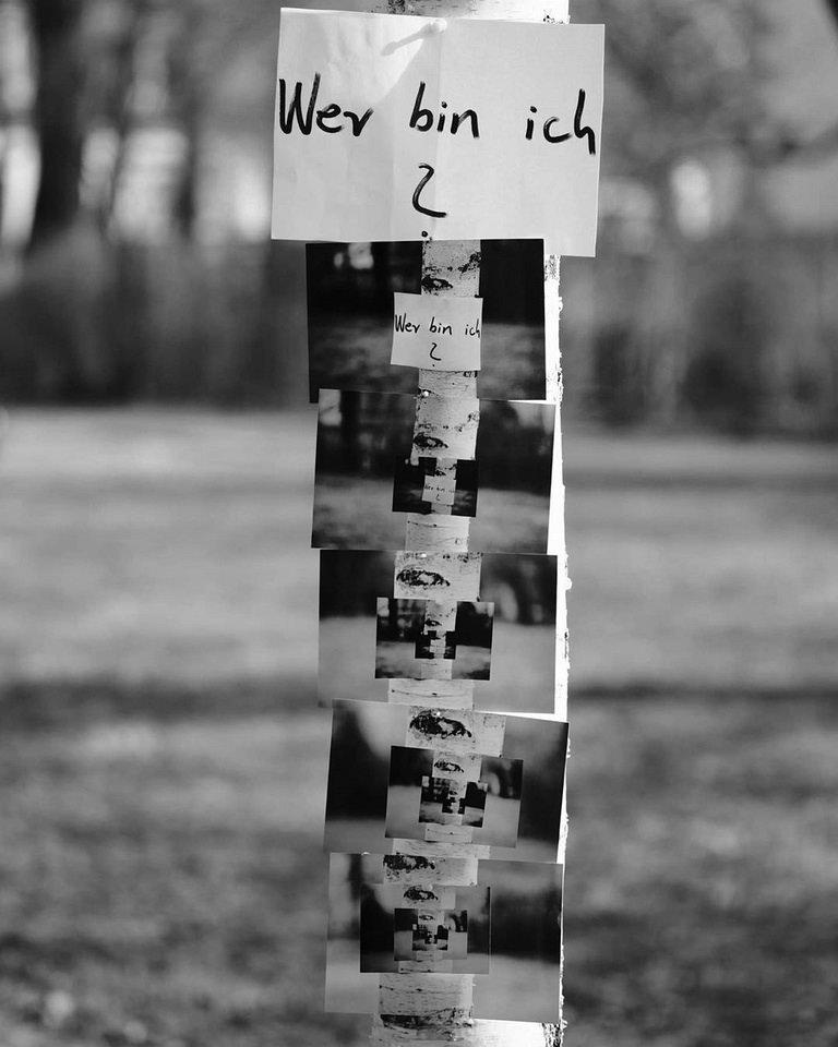 Bildsequenz an einem Baum