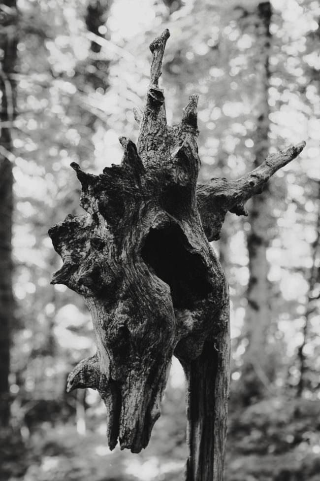 Holz formt einen Drachenkopf