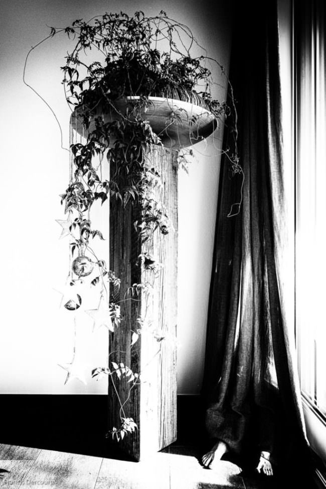 Pflanze auf Podest und Schuhe hinter einem Vorhang