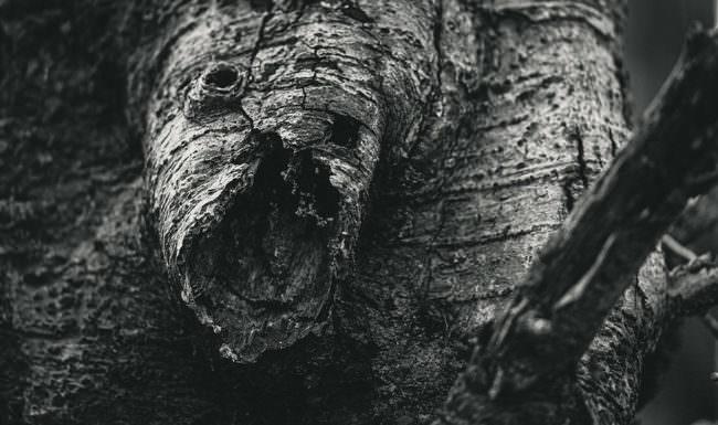 Baumstammgesicht