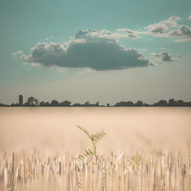 Collage mit Feld vor Himmel