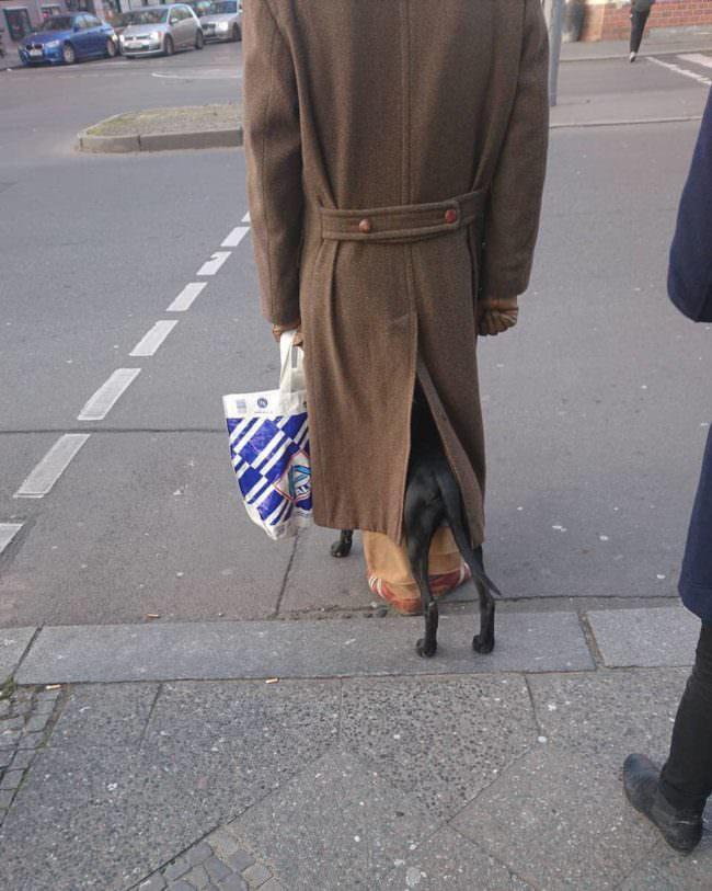 Hund steht unter dem Mantel einer Person auf der Straße