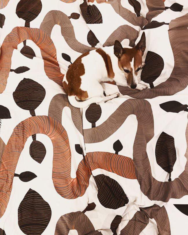 Hund auf einer Bettdecke