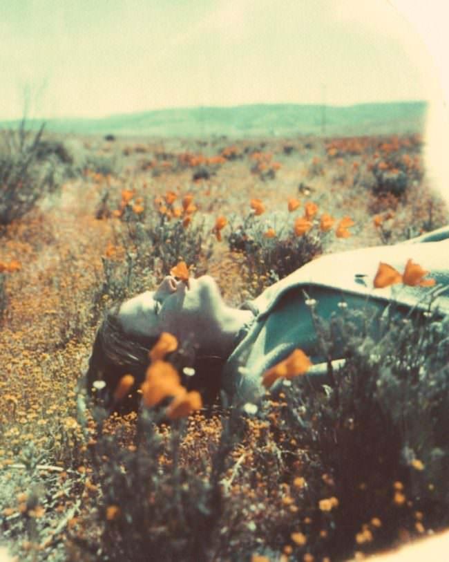 Mensch liegt in einer Blumenwiese