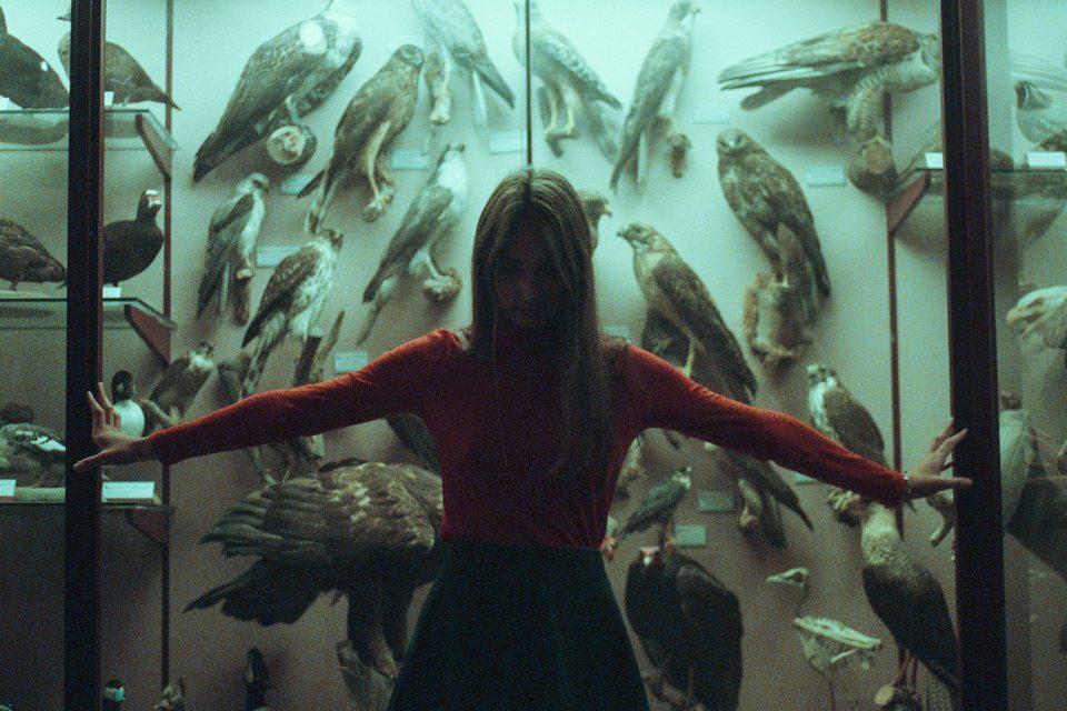 Portrait vor einer Wand voller ausgestopfter Vögel