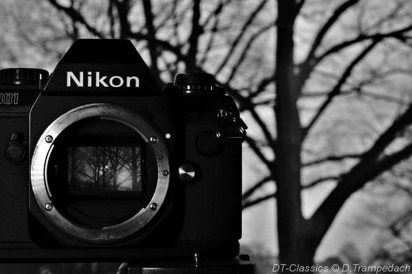 Spiegel in einer Kamera zeigt einen Baum