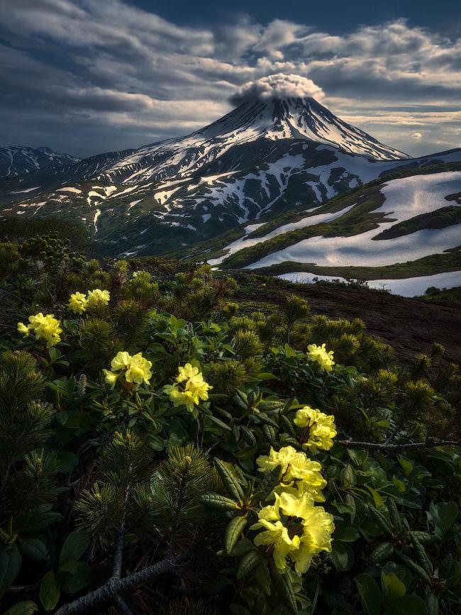 Blumen im Vordergrund und Berg im Hintergrund