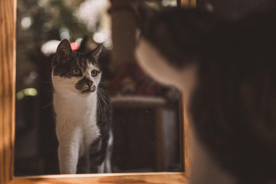 Katze sieht sich im Spiegel