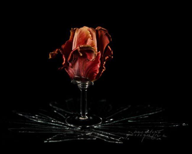 Gebrochenes Glas mit Blüte