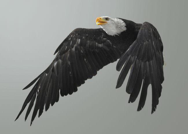 Vogel im Flug