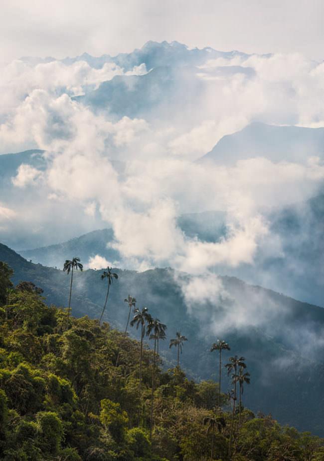 Dunst über einem Wald voll Palmen