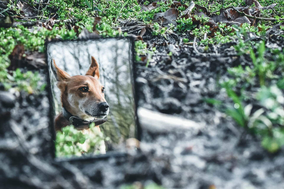 Hund im Spiegel