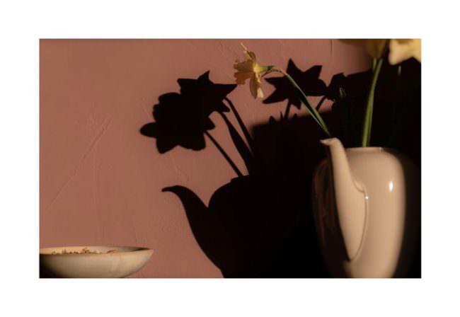 Blumen und Schatten