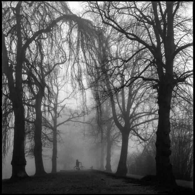 Spaziergänger*in zwischen Bäumen