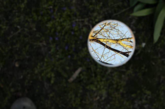 Spiegel zeigt Äste