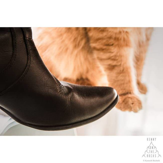 Katze und Stiefel