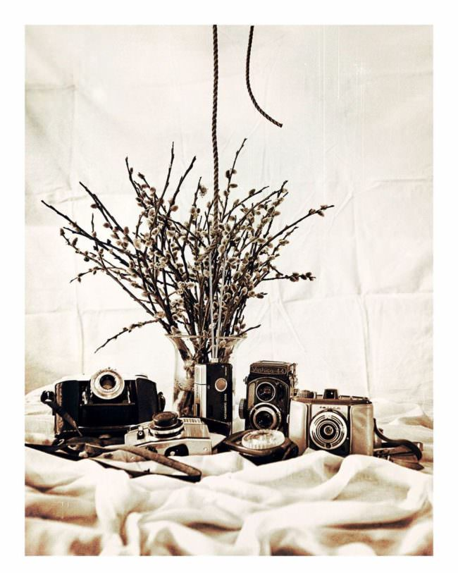Kameras mit Blumen