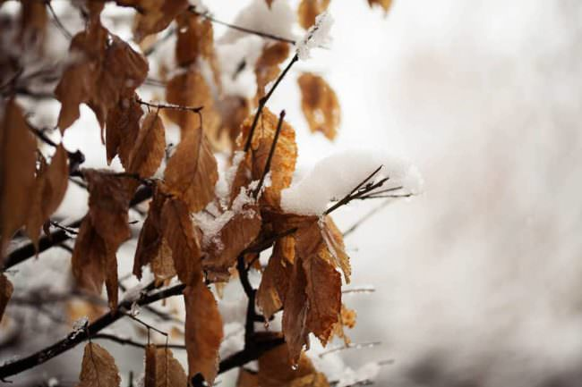Schnee auf Laub