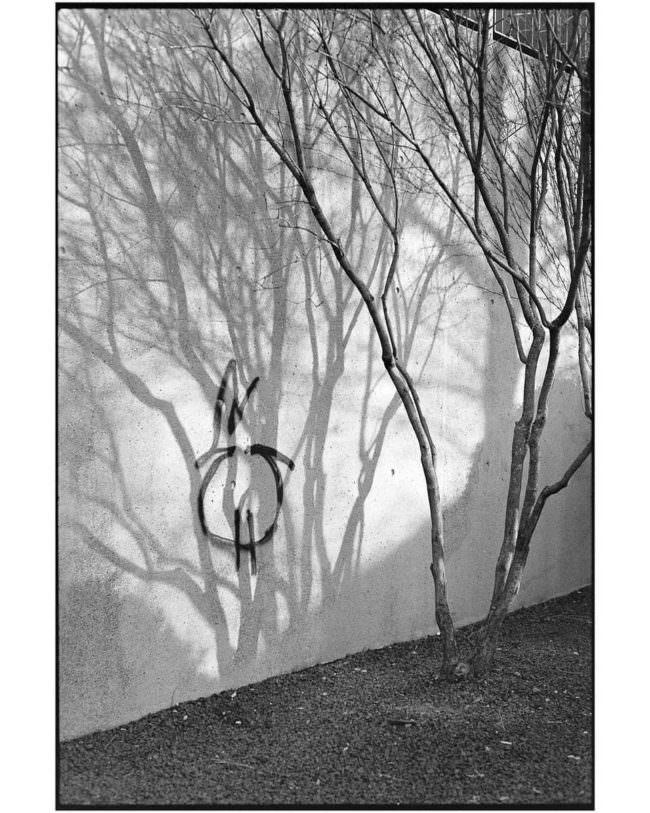 Baum mit Schatten an einer Wand