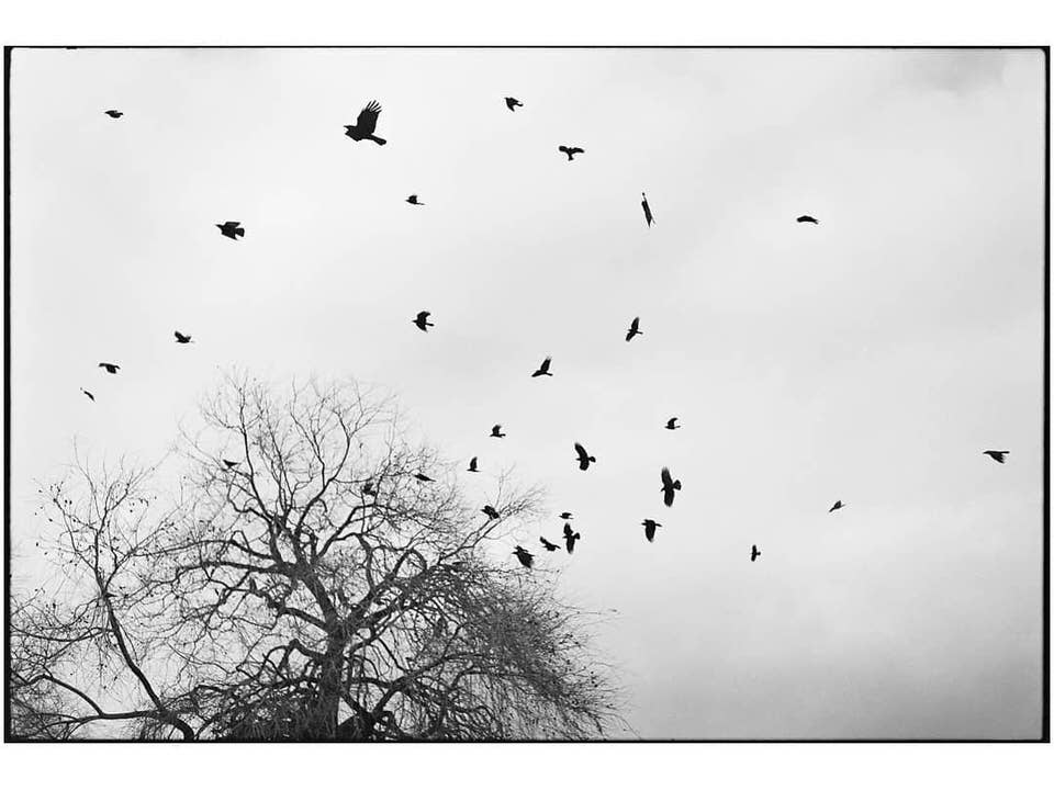 Baum und Vögel