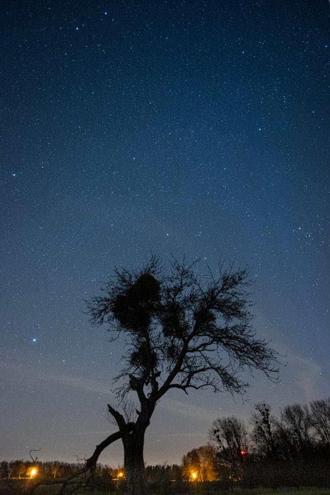 Baum unter einem Sternenhimmel