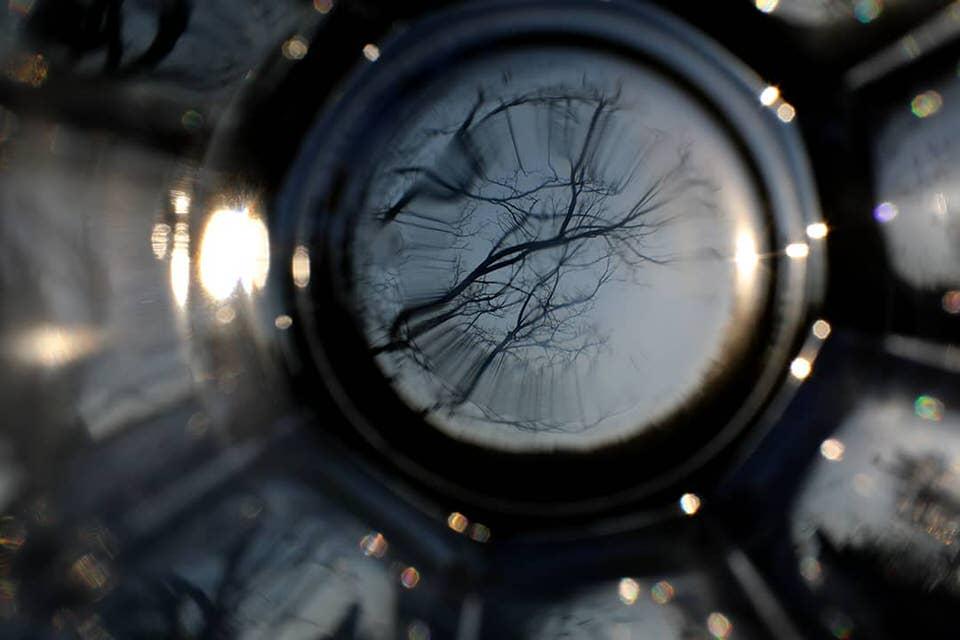 Bäume durch ein Glas
