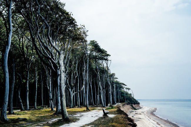Bäume an einem Strand