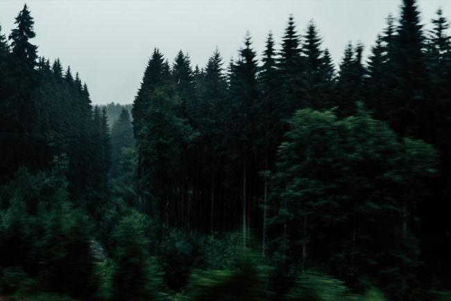 Wald im Vorbeifahren