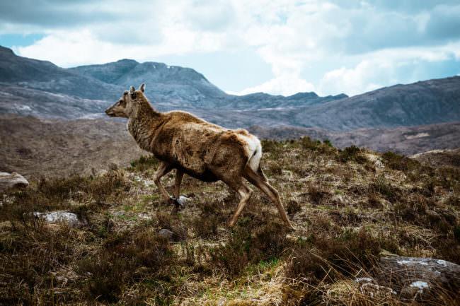 Tier in einer Landschaft