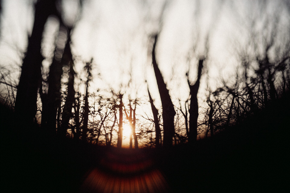 Wald im Sonnenuntergang
