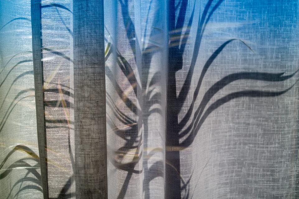 Schatten einer Pflanze hinter einem Vorhang