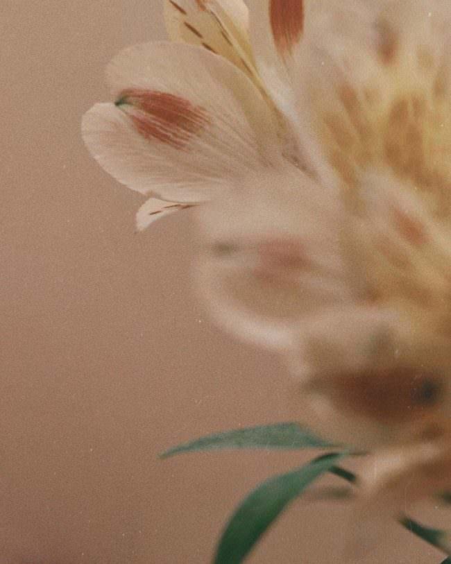Nahaufnahme Blüte