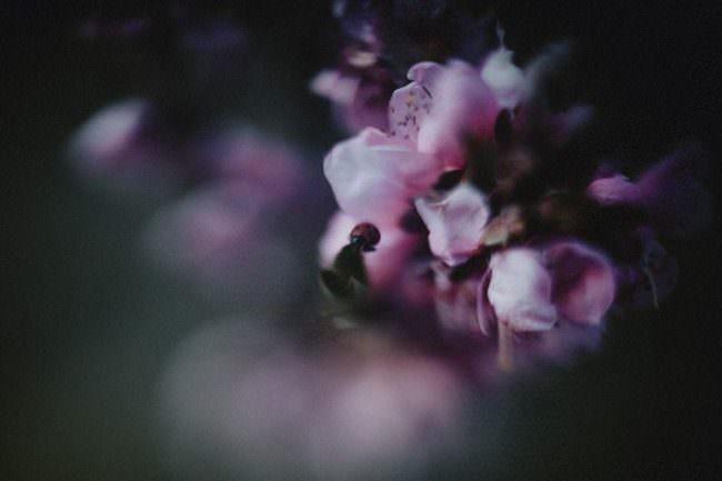 Blüten mit Marienkäfer