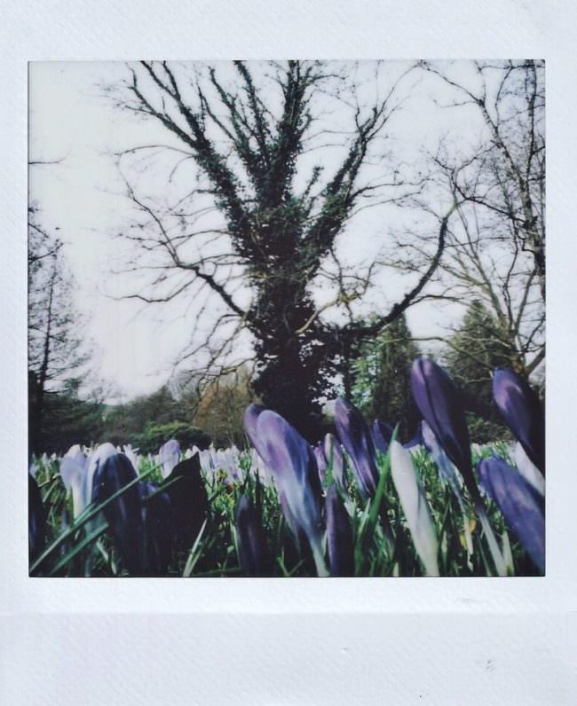Polaroid mit Blütenmeer